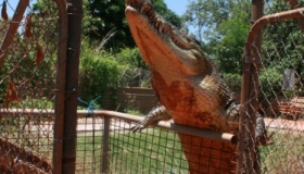 Maniac - The most dangerous Crocodile in the world